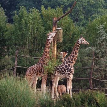 Зоопарк и Ботанический сад в Чешской Республике: Пльзень