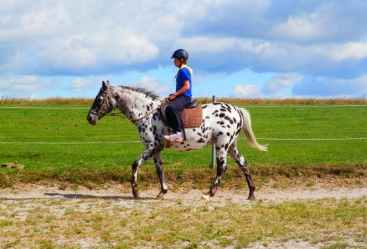 Horse Riding in the Czech Republic: Pilsener Region
