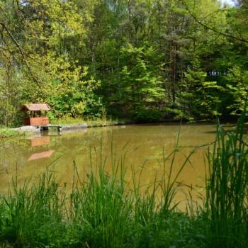 Fishing Experience in the Czech Republic: Bohemia