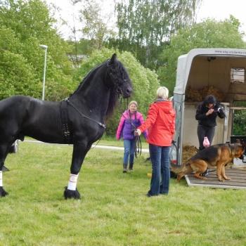 Horse Riding in the Czech Republic: Pilsen Region