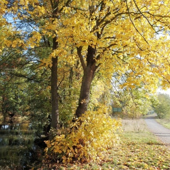 Tiding Walk in the Nature: Fauna and Flora in the Czech Republic