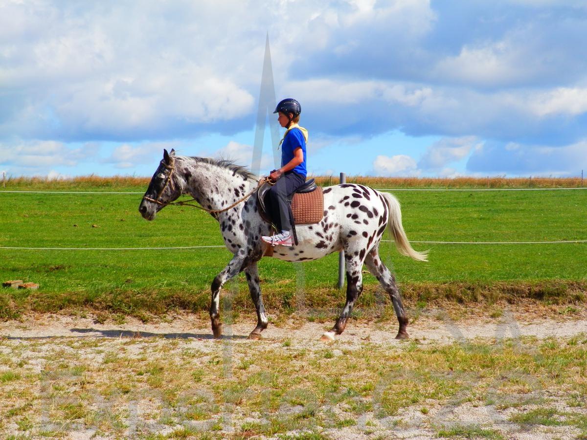 czech riding